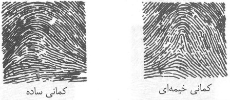 نمونه کمانی اثر انگشت